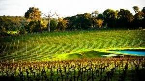 Margaret River Wine Region - Western Australia