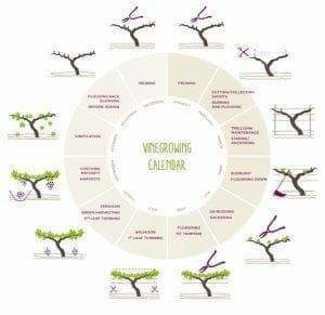 Annual Vineyard Cycle
