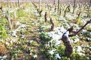 Winter time in the vineyard - Savage Vines
