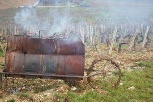Winter Pruning - Cane Burning