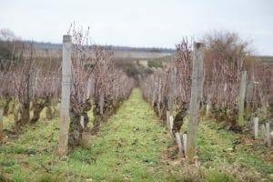 Winter Vineyard - Savage Vines