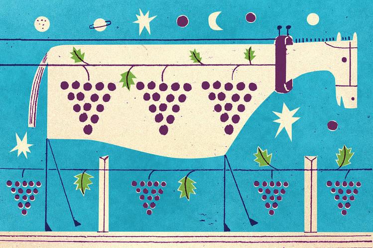 Organic Wine - Natural Pest Control