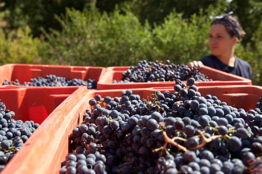 Urban Wineries London - Growers Fruit