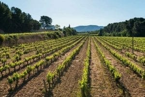 Best Natural wineries   best natural wineries in catalonia   top five natural wineries in catalonia   catalan wineries   best catalan wineries