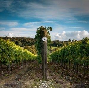 The Best English Vineyards | English Wine Tours | Buy English Wines Online