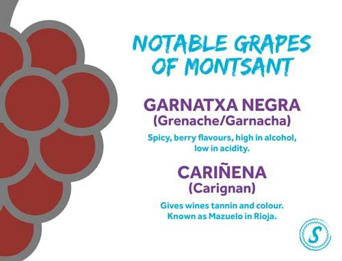 grapes of montsant - catalunyan grapes - grapes of spain wine grapes for red wine - red wine grapes of spain