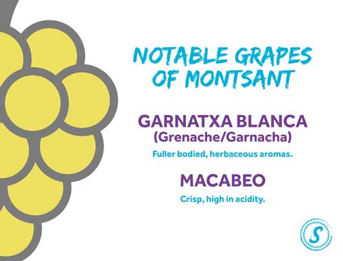 white wine grapes - spanish white wine - catalan grapes -montsant wine grapes