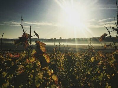lightfoot and wolfville | low intervention vineyard | gaspereau valley
