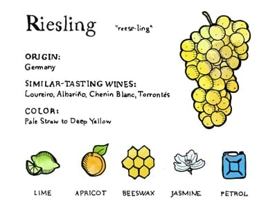 Riesling Taste Profile | Learn About Riesling