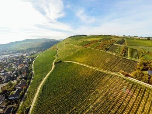 Riffel Winery Rheinhessen