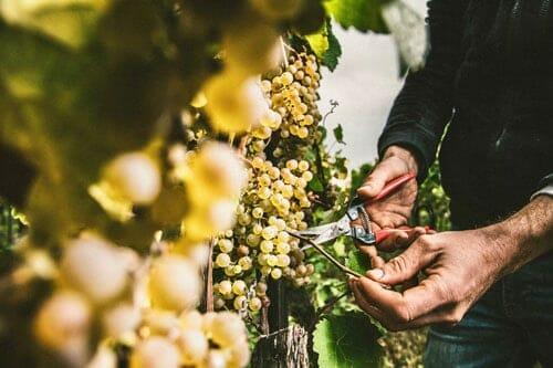 Rheinhessen Wine Region