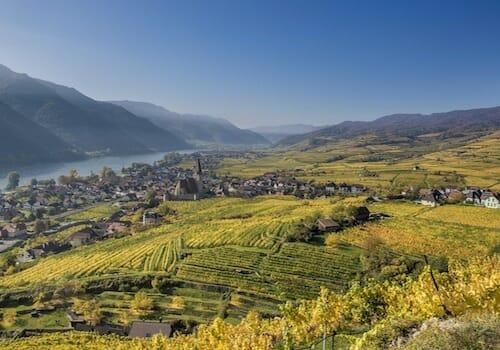 Austrian Vineyards