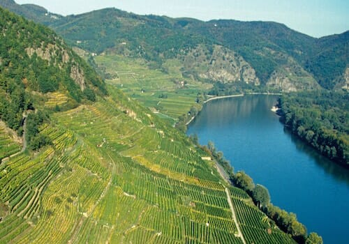 Vineyards on the banks of the Danube River
