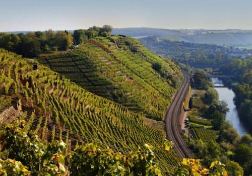Steep Vineyards in Mosel