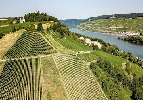 Riffel Vineyards - top producers of German wine