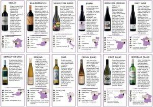 Wine Tasting Notes | Savage Vines